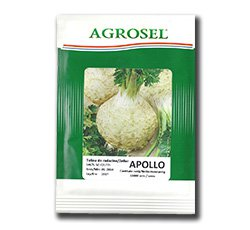 Seminte de telina Apollo